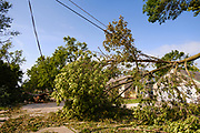 "12 AUGUST 2020 - SLATER, IOWA: Trees across Benton Street in Slater Wednesday. The trees were blown over during the storm Monday. According to Iowa Governor Kim Reynolds, the storm damaged 10 million acres of corn and soybeans in Iowa, about 1 one-third of Iowa's 32 million acres of agricultural land. Justin Glisan, Iowa's state meteorologist, said the storm Monday, Aug. 10, lasted 14 hours and traveled 770 miles through the Midwest before losing strength in Ohio. The storm was a seldom seen ""derecho"" that packed straight line winds of nearly 100MPH. The storm pummelled Midwestern states from Nebraska to Ohio.     PHOTO BY JACK KURTZ"