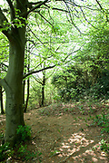 Tree in woodland at The Larches, Kent Wildlife Trust, UK