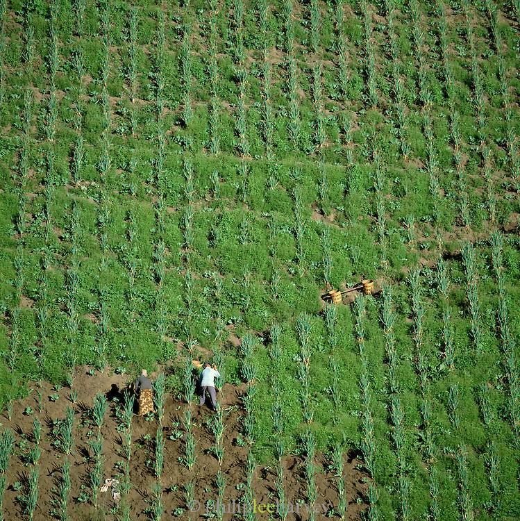 Farmers working on a steep mountainside field, Java, Indonesia.