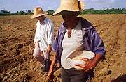 23 JULY 2002 - TRINIDAD, SANCTI SPIRITUS, CUBA: Women on a state collective farm near the colonial city of Trinidad, province of Sancti Spiritus, Cuba, planting corn July 23, 2002. Trinidad is one of the oldest cities in Cuba and was founded in 1514. .PHOTO BY JACK KURTZ