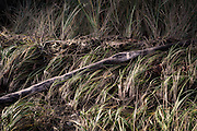 Detail image of grasses in South Puget Sound, Washington, Pacific Northwest by Randy Wells