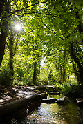 Sun shining through the trees and across the stream and woodland paths in St Catherine's, Jersey, CI