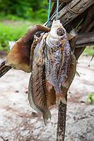 Sun dried fish as a staple diet for rangers on Rafuki Island, Vamizi Island, Mozambique