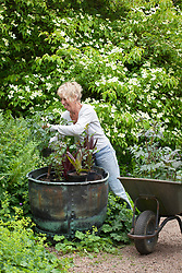 Carol Klein planting up copper container with eucomis and dahlias