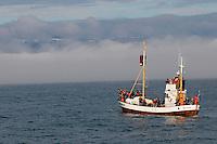 Islande, observation de baleine dans la baie de Skjalfandi a Husavik // Iceland, whale watching around Husavik