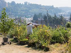YES Farm, Seattle, Washington