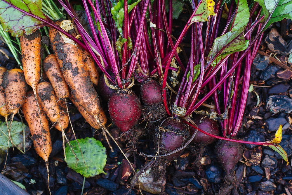 Just pulled carrots and beets out of the garden.