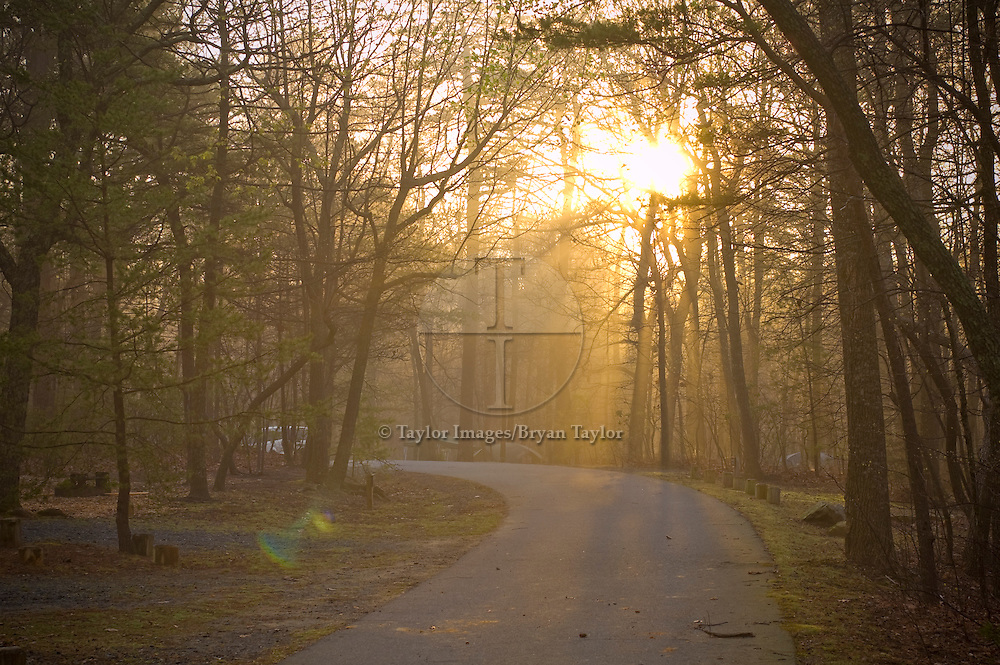 The golden morning sun shines on a road through the tree tops in the forested campground at Hanging Rock State Park in North Carolina.