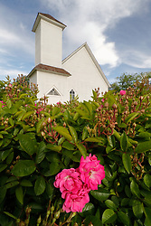 Historic church and wild rose (Rosa sp.) Blackland Prairie remnant at Frankford Church and Cemetery, Dallas, Texas.