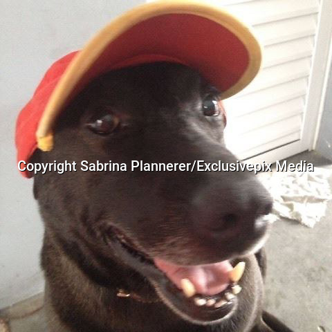 """Dog Abandoned At Gas Station Is Now Its Cutest Employee<br /> <br />  This friendly dog, named Negão, might not be your typical gas station employee — but he is certainly one of the sweetest.<br /> <br /> Sadly though, things weren't always so good for him. Two years ago, Sabrina Plannerer and her partner purchased a Shell gas station under construction in the town of Mogi das Cruzes, Brazil. It was around this time that she discovered the adult dog roaming around the site, after he'd been abandoned there by his former owner and was too frightened to leave.<br /> <br /> So, rather than try to shoo Negão away, they stepped in to help him.<br /> <br /> """"We adopted him immediately and got him all the care animals need,"""" said Sabrina Plannerer . """"We took him to the vet to get vaccinated and de-wormed. We bought him food, a dog house, and a leash to take him on walks.""""<br /> <br /> And when the gas station finally opened, Negão even got a job ...and an employee badge to prove it. <br /> <br /> Plannerer wasn't sure at first how Negão would react to the sudden bustle of business in the place that he'd been calling home, but the happy dog has proven to be a natural at providing world-class customer service. And he does it with a smile. """"Negão waits for people to arrive, and then goes up to say hello, winning them over with his charms,"""" Plannerer says. """"Customers love him. Some people even bring him toys.""""<br /> <br /> As much as the dog enjoys his job as greeter, his life isn't limited to these brief encounters. Each day, Plannerer or another employee takes Negão on walks through town for exercise. And the gas station is staffed 24/7, so there's always at least one coworker close at hand to make sure he's happy and safe.  Negão has become a poster-pup of sorts for a local initiative from the charity Grupo FERA, which aims to pair needy stray dogs with businesses in the event that they cannot find a more traditional home.<br /> <br /> """"It's been sensational, encouraging peo"""