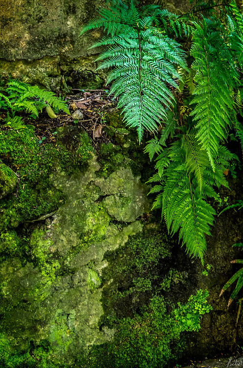 An images of ferns and mosses, very green.