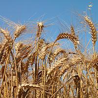 Field Crops and Garden Plants