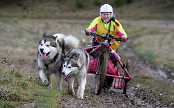 © London News Pictures. 29/12/2017. Salisbury, UK. Members of the Alaskan Malamute Working Association (AMWA) take part in the '4-paw drive' at the Working Dog Event, the Salisbury Plain Trek on Salisbury Plain in Wiltshire, England.  Teams cover a minimum of 60 miles over the two days, with a choice of four distances - 7.5, 11, 16 or 22 miles. Photo credit: Shane Wilkinson/LNP