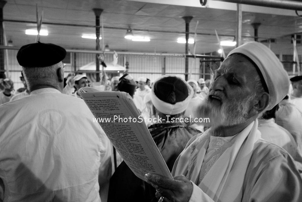 Israel, West Bank, Mount Gerizim, Samaritan Passover Sacrifice ceremony The Elders