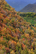 A mountain flank in Susa Valley, one of the many valleys of the Western Alps in Piedmont, Italy, as it looks like at the end of October when the fall colours reach their peak.