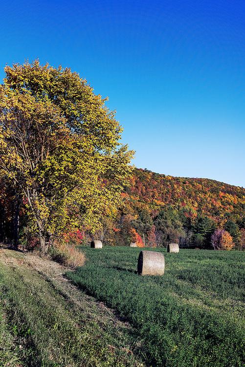 Hay bales in autumn field, Cornwall, Vermont, USA.
