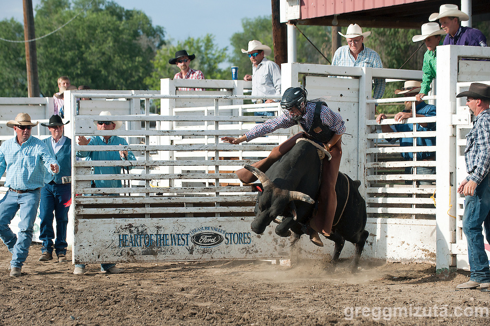 Steer Riding. Vale 4th of July Rodeo, Vale Rodeo Arena, Vale, Oregon, July 4, 2015.
