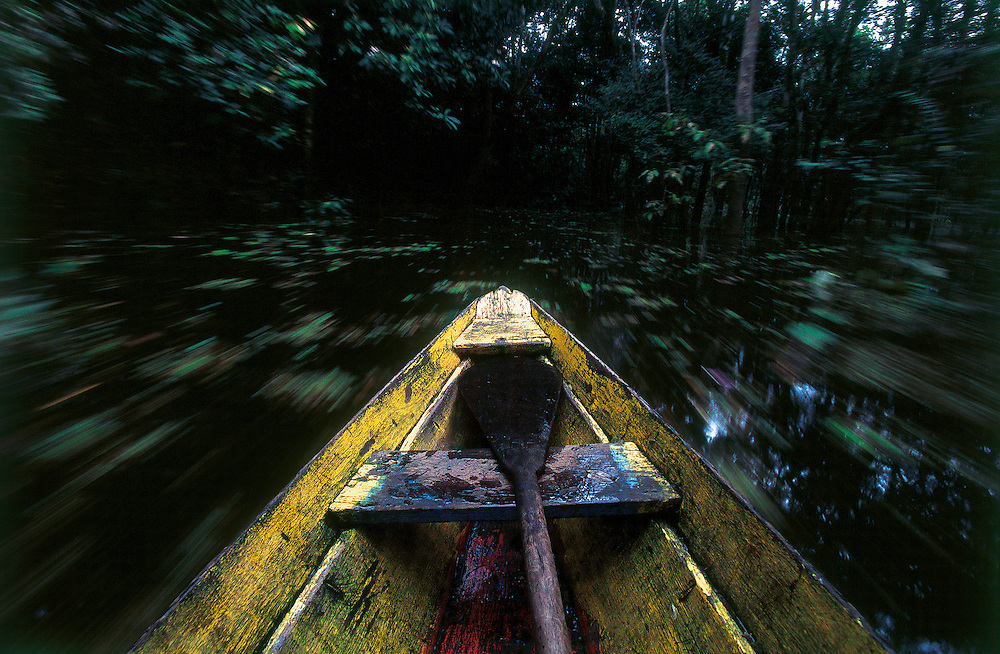 """Manacapuru_AM, Brazil.<br /> <br /> In flooded forests, the """"igarapes"""" lead to the nests. In this environ- ment, canoes are the only possible means of transportation.<br /> Manacapuru, Amazonas, Brazil.<br /> <br /> Foto: JOAO MARCOS ROSA / NITRO"""