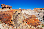 Pedestal logs and petrified log sections on Blue Mesa, Petrified Forest National Park, Arizona