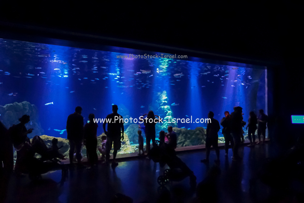 Israel, Jerusalem, Tourists view the large aquarium