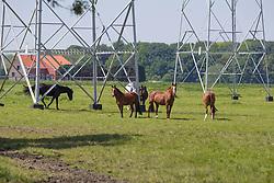 Manege De Verbrande Brug - Eppegem 2013<br /> © Dirk Caremans