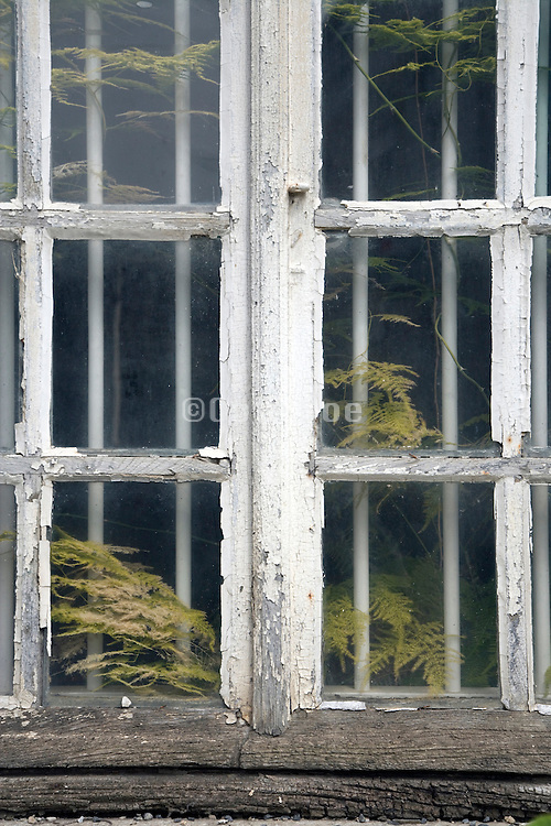 very old wooden window with green plants growing behind it