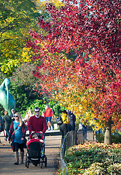 © Licensed to London News Pictures. 01/11/2015. London, UK. A couple much a pram past a tree displaying a full rage of autumn colours, from green through to deep red, in Hyde Park, Central London.  Photo credit: Ben Cawthra/LNP