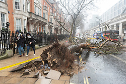 © Licensed to London News Pictures. 09/02/2020. London, UK.A tree has fallen over a road near Victoria train station. High winds of up to 60mph hit London as Storm Ciara hits central London. Photo credit: Ray Tang/LNP
