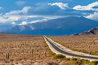 RECTA DE TINTIN, PARQUE NACIONAL LOS CARDONES, PROV. DE SALTA, ARGENTINA