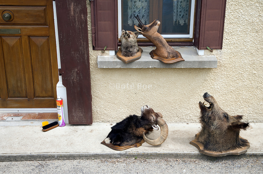 stuffed animals placed outdoors for cleaning