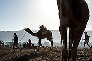 Silhouette of a nomad leading his camel through the desert.