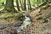 Nederland, The Netherlands, Plasmolen, 3-5-2018 De Jansberg is een heuvel, onderdeel van de stuwwal die tussen Groesbeek en de Maas ligt . Hier ligt de bron van de Sprengenbeek die langs het wandelpad naar beneden loopt en een watermolen voedt . Lokatie is opgenomen in de wandelroute walk of wisdom die door de regio, omgeving, rijk van nijmegen voert, pelgrimstocht, pelgrimsroute, Foto: Flip Franssen