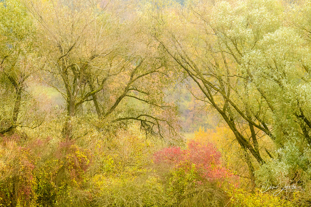 Late autumn forest in the Main/Danube Canal, Main-Danube Canal, Bavaria, Germany