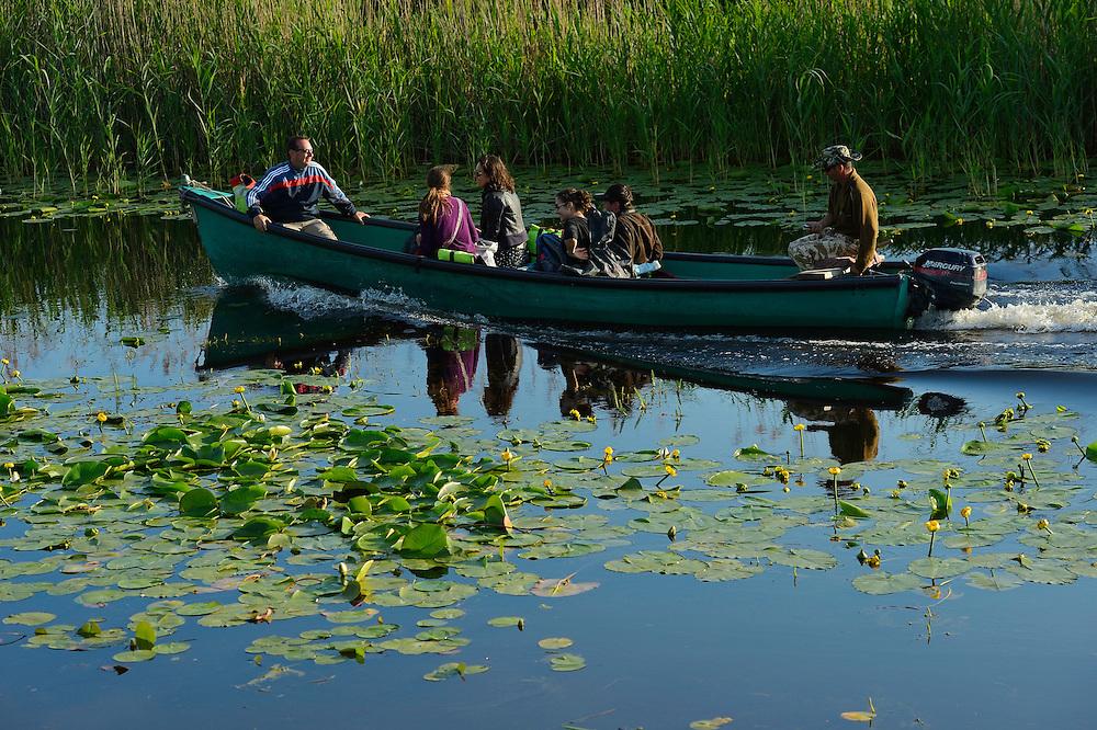 Tourism in the delta, boat trip, Danube delta rewilding area, Romania