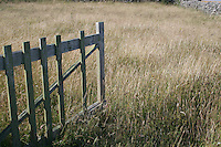 Gate leading into field with long grasses, Inis Mor, The Aran Islands, County Galway, Ireland