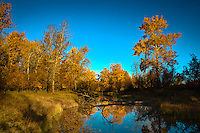 The trees in the Calgary area are at the peak of the fall colors right now and they are very beautiful. The ponds at Carburn Park have been completely still every morning lately and I finally had a chance to create some beautiful landsacape images of the park.<br /> <br /> ©2010, Sean Phillips<br /> http://www.RiverwoodPhotography.com