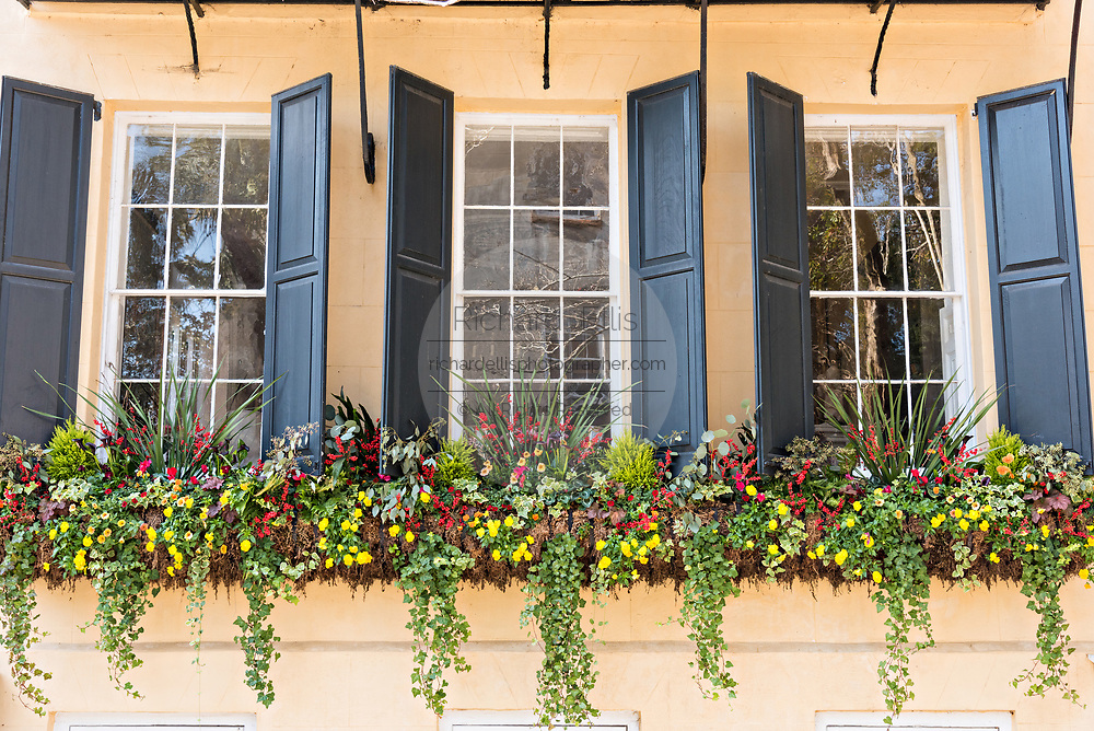 Winter flowers blooming in window boxes at a historic home on Meeting Street in Charleston, SC.