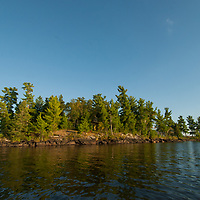 Towering white pines thrive on islands amidst Lake of the Woods,  Ontario, Canada.