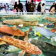 Live Reef Fish Trade