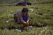 Nomadic yak herder Karsal's wife Phurba washes her hands in a small creek outside yak hair tent home in the Tibetan Plateau after picking fresh yak dung and made patties from it to dry in the sun for use as fuel for cooking on her earthen stove. (Karsal is featured in the book What I Eat: Around the World in 80 Diets.) MODEL RELEASED.