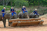 Elephant training camp chiang; dao near Chiang Mai,  Thailand, Oct 2005