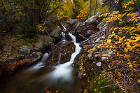 A small stream rushes through the hillside in Big Cottonwood Canyon near Salt Lake City, Utah in the Fall.  Fall colors envelope the area adding a splash of color.