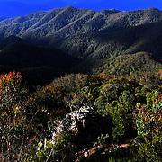 The Great Koala National Park