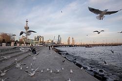 Baku Ocean Walkway With Black-headed Gulls