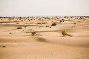 Desert around Timbuktu, in Mali.