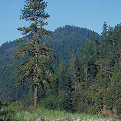 Wild Rogue Wilderness, OR..Whitewater Paddling. Rogue River.  Siskiyou Mountains.  Siskiyou National Forest.  June.