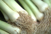 Close up selective focus photograph of a group of Leeks