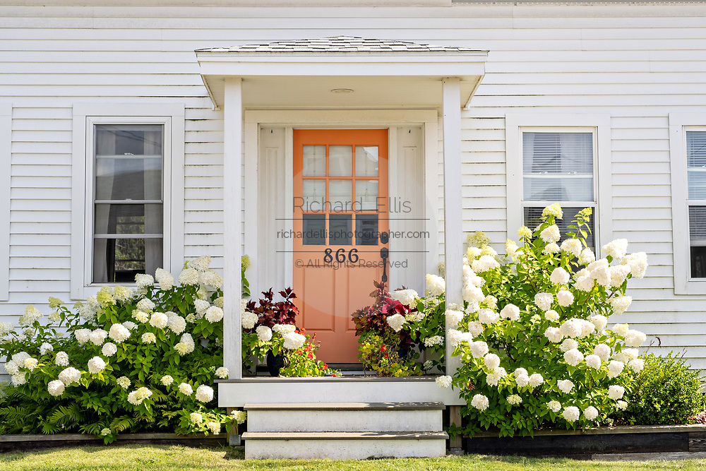 An old saltbox style home with hydrangea shrubs blooming in the quaint fishing hvillage of Port Clyde, Maine.