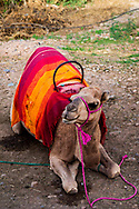 06-10-2015 -  Foto van Kameel bij De stad van Marrakech in Marrakech, Marokko.