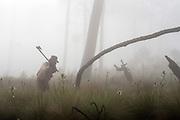 Un guardia forestal corta un árbol viejo durante una faena para proteger el bosque de Milpa Alta de futuros posibles incendios. Septiembre 21 de 2015. (Foto: Prometeo Lucero)